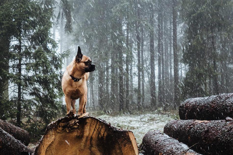hund gassi beschaeftigung 01