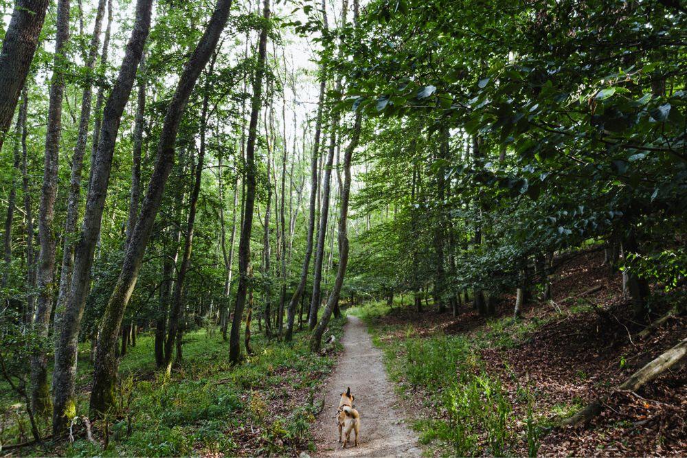 Gassi Hund Naturpark Eifel Urftalsperre 001