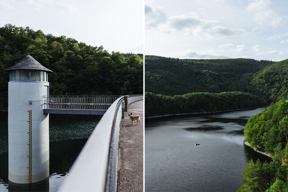 Gassi Hund Naturpark Eifel Urftalsperre 006