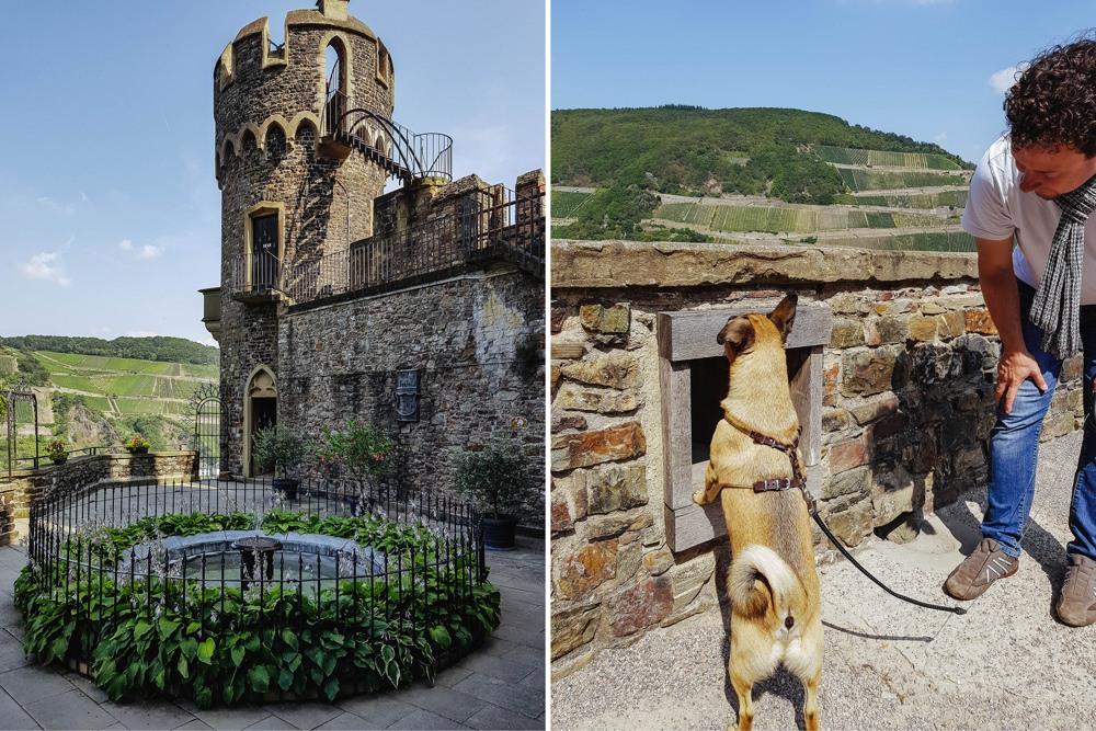 Ausflug Hund Rheingau Burg Rheinstein