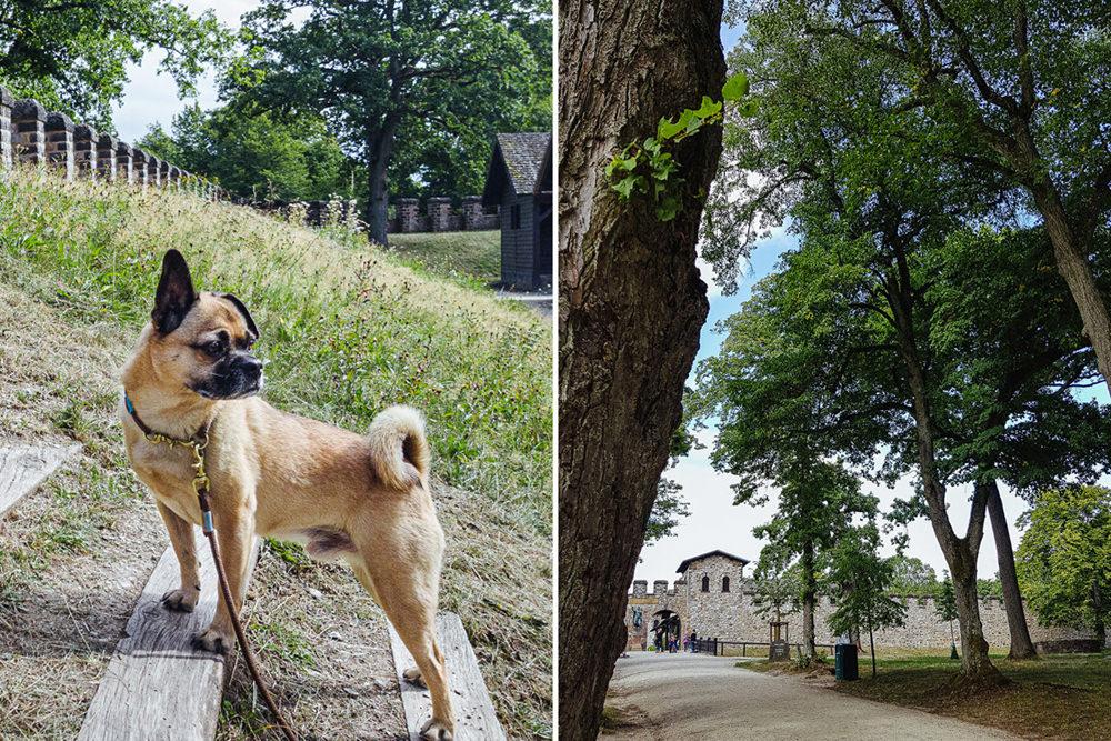 Ausflug Hund Taunus Roemerkastell Saalburg
