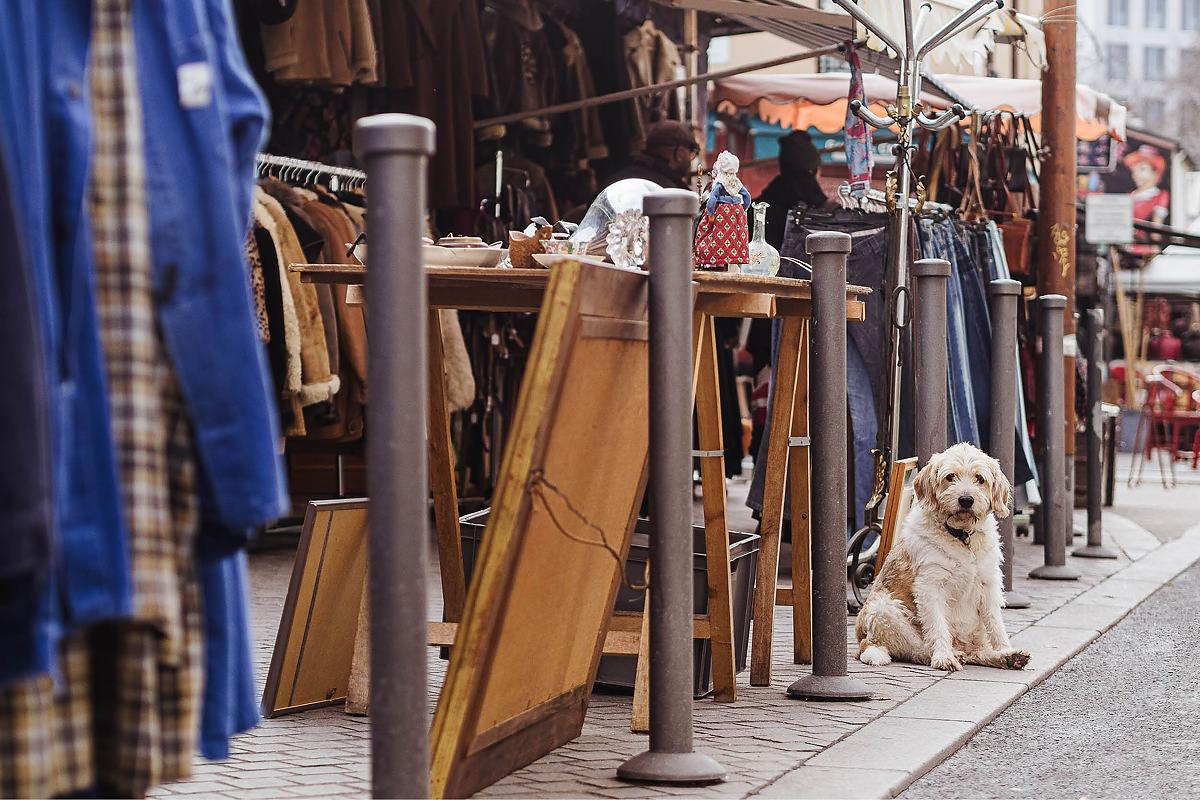 Hund Flohmarkt Paris 0004