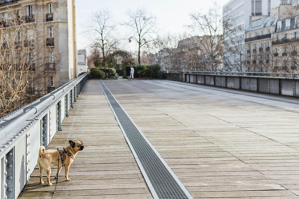 Paris Hund Highline 0004