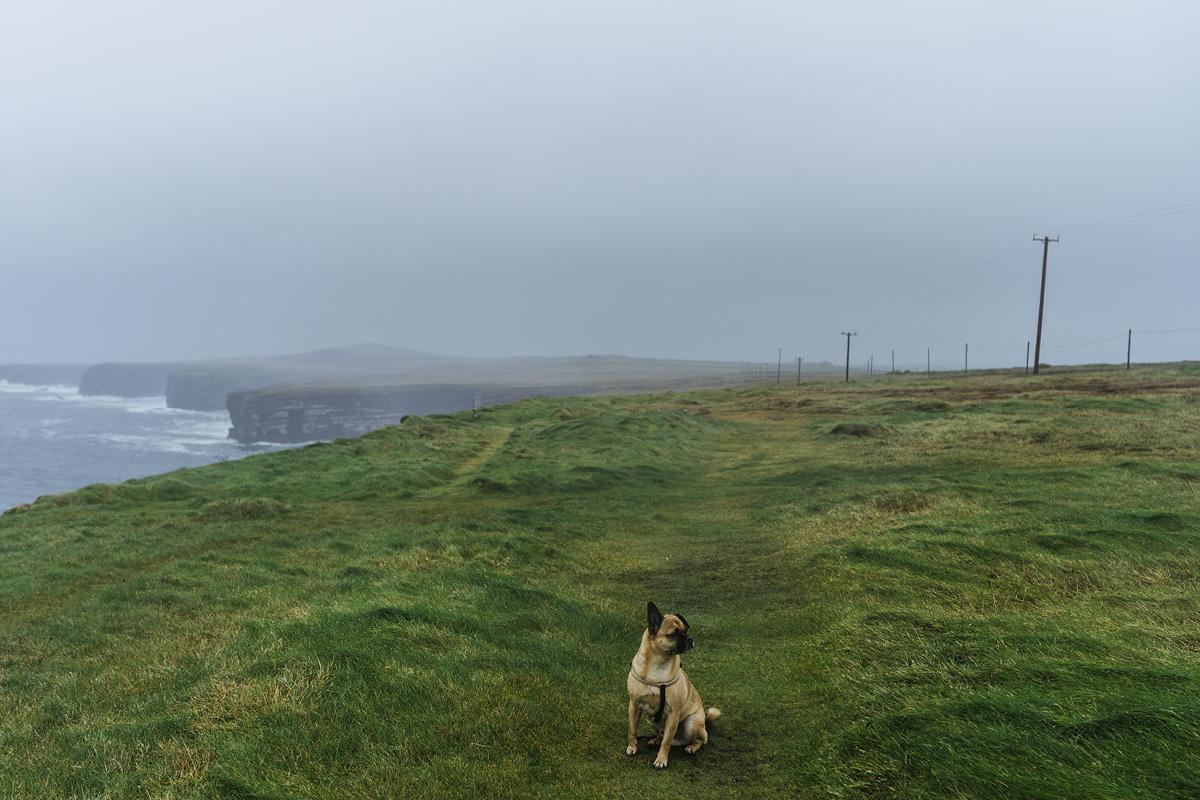 Ausflug mit Hund Irland Clare Loop Head