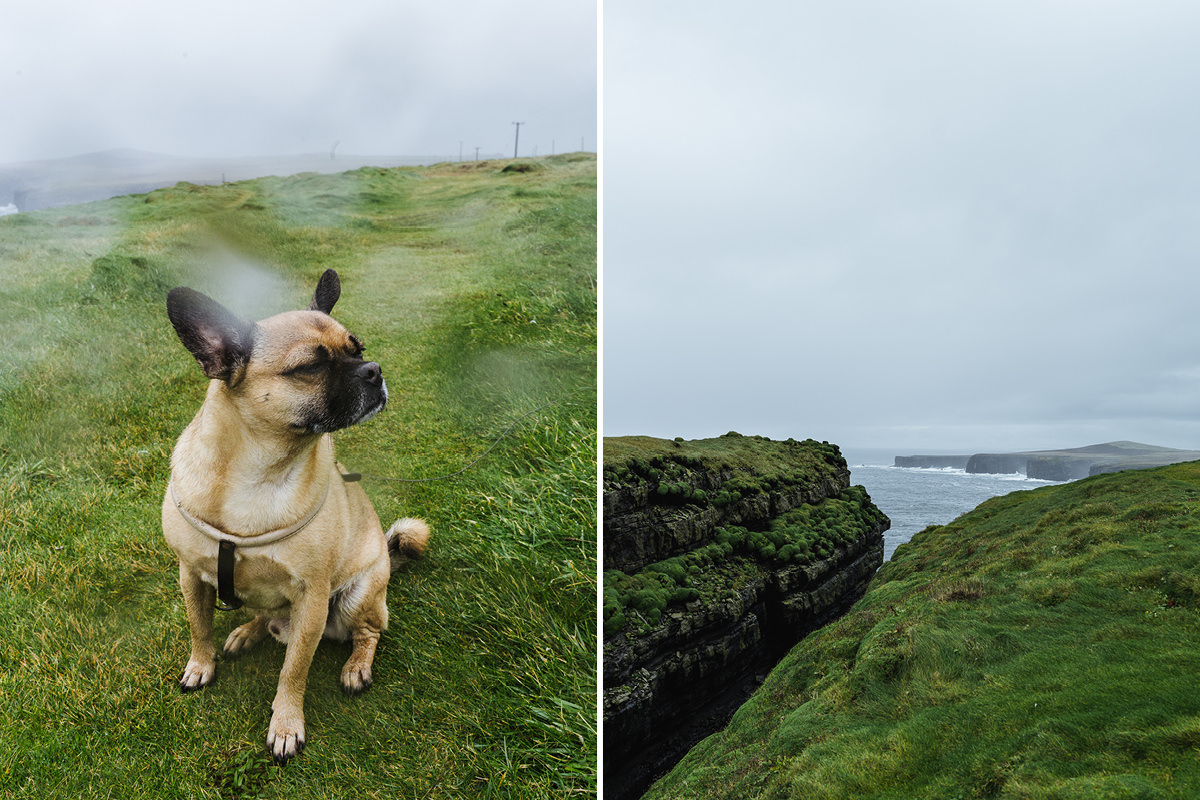 Loop Head dog Hund Irland 007