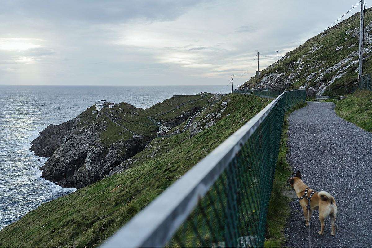 Ausflug mit Hund Irland Cork Mizen Head