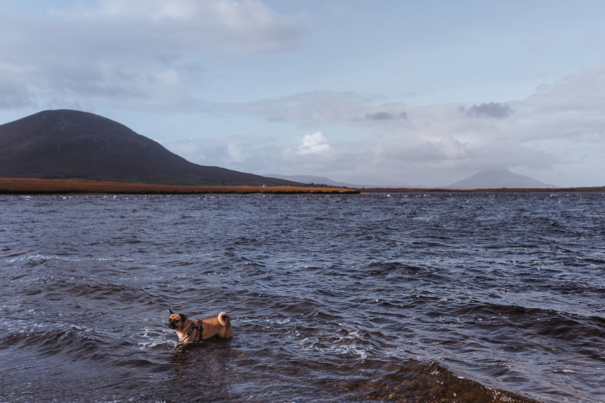 BallyCroy Nationalpark dog Hund Irland 005