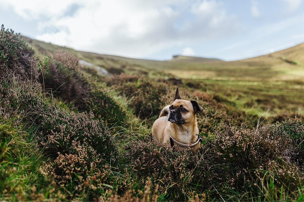 Keem Bay Hund Achill Irland 013