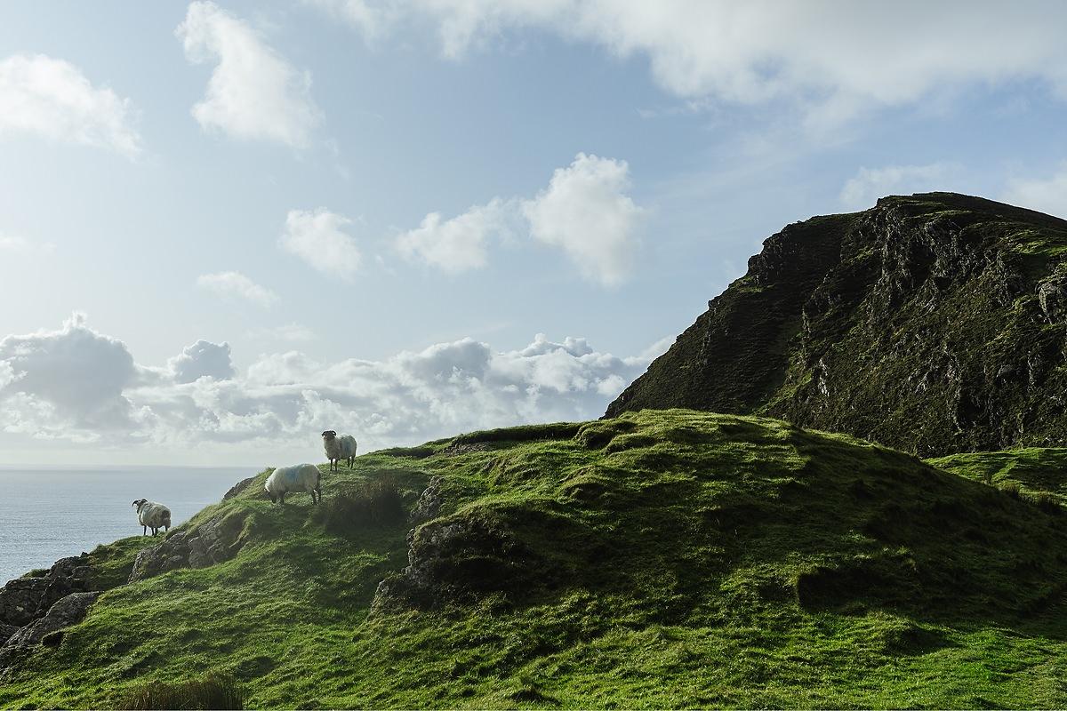 Keem Bay Hund Achill Irland 017