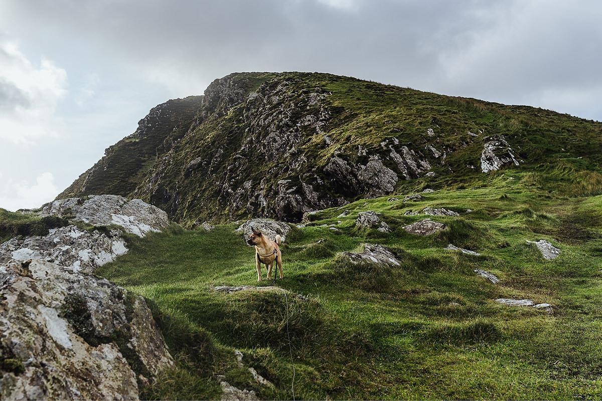 Hund Irland Glenveagh Castle 015