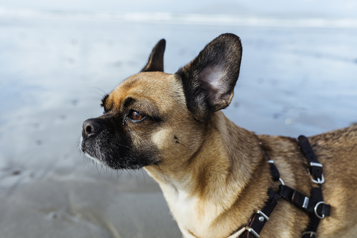 carrowniskey beach dog hund irland 005