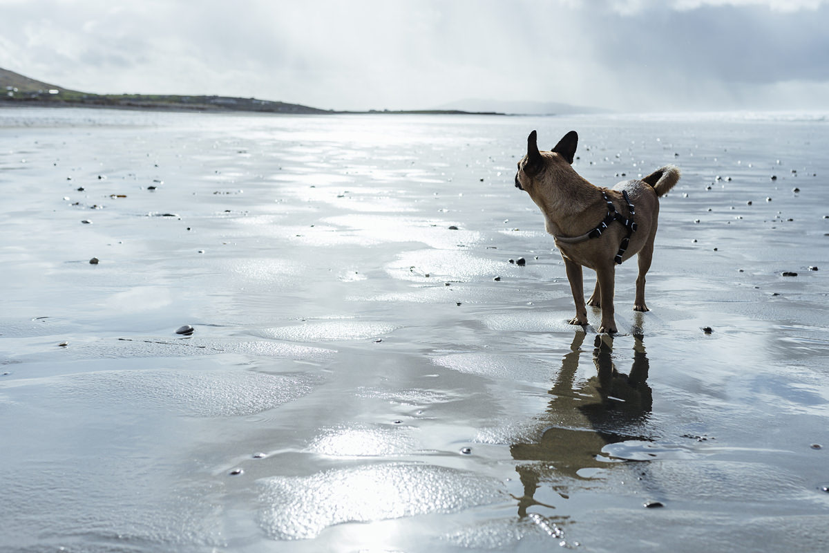 carrowniskey beach dog hund irland 003