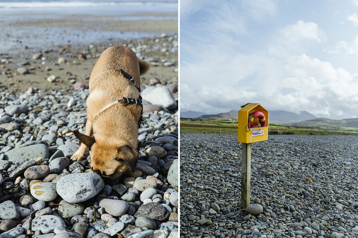 carrowniskey beach dog hund irland 007