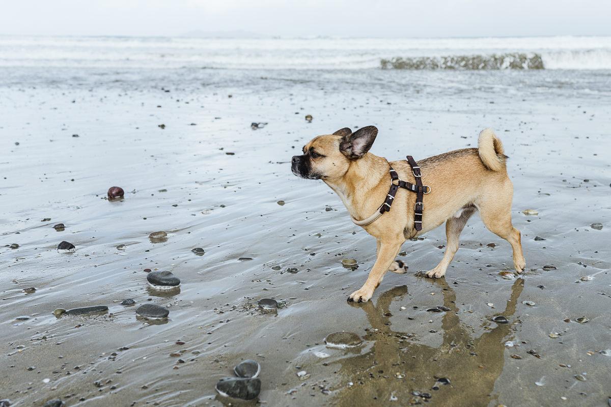 Ausflug mit Hund Irland Mayo Carrowniskey Beach