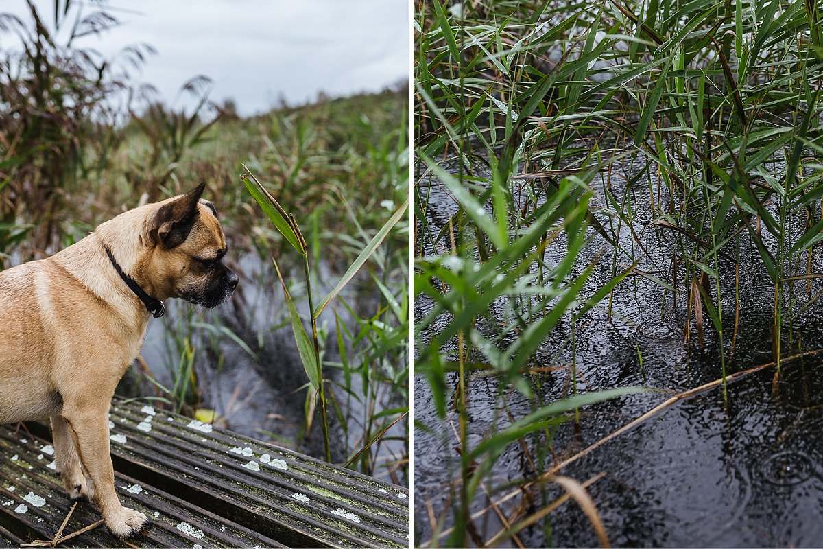 Ausflug mit Hund Irland Offaly Lough Boora