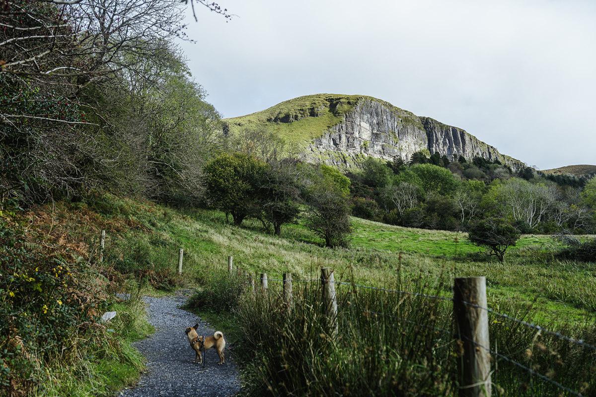 Devils Chimney dog Hund Irland 001