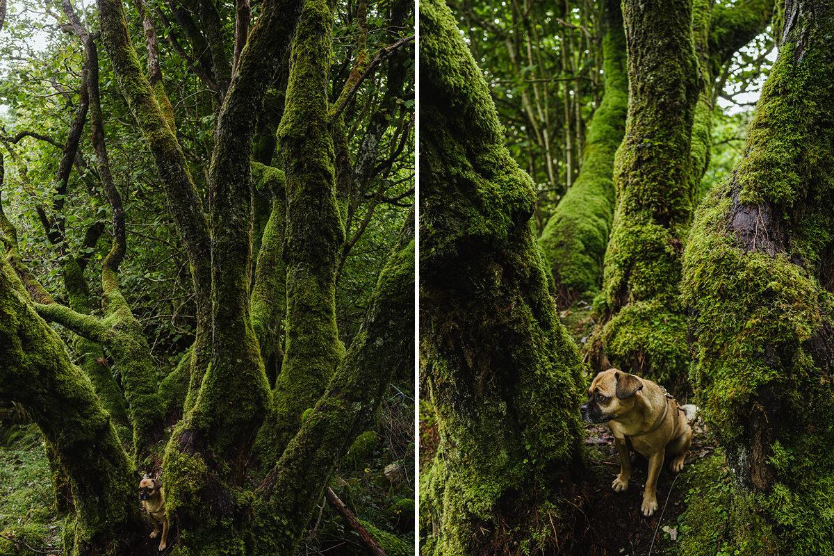 Devils Chimney dog Hund Irland 006