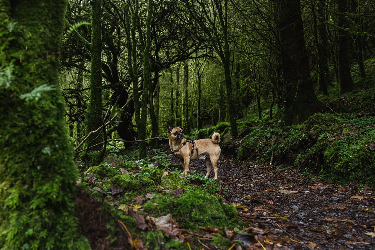 Devils Chimney dog Hund Irland 007