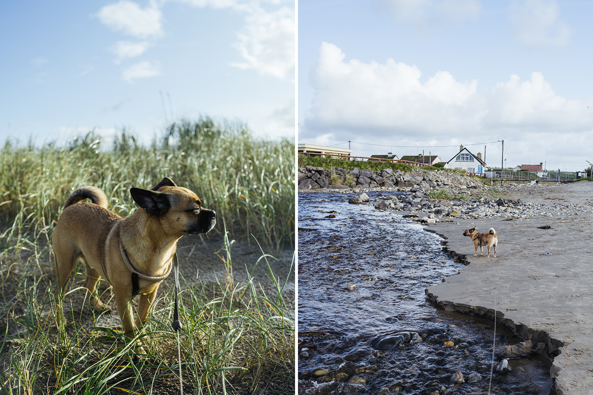 Enniscrone Beach dog Hund Irland 003