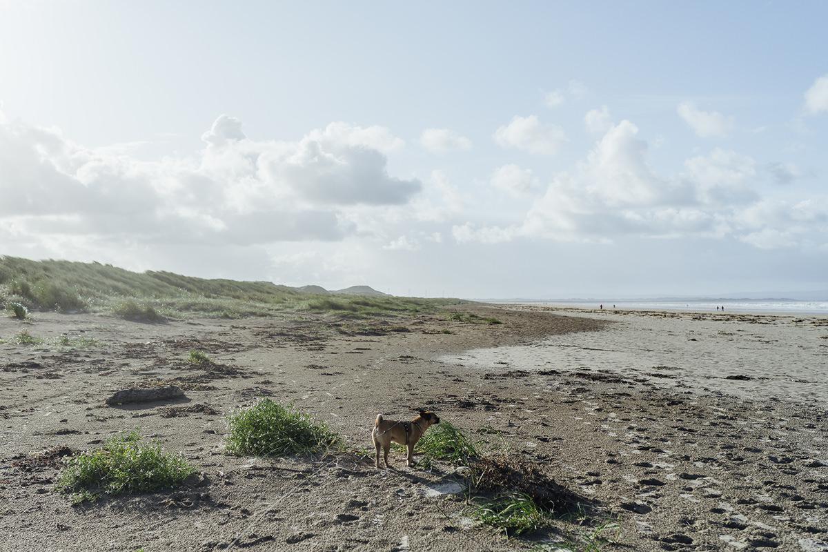 Enniscrone Beach dog Hund Irland 004