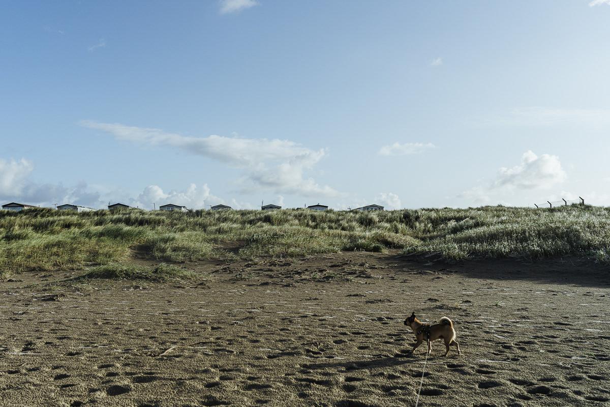 Enniscrone Beach dog Hund Irland 007