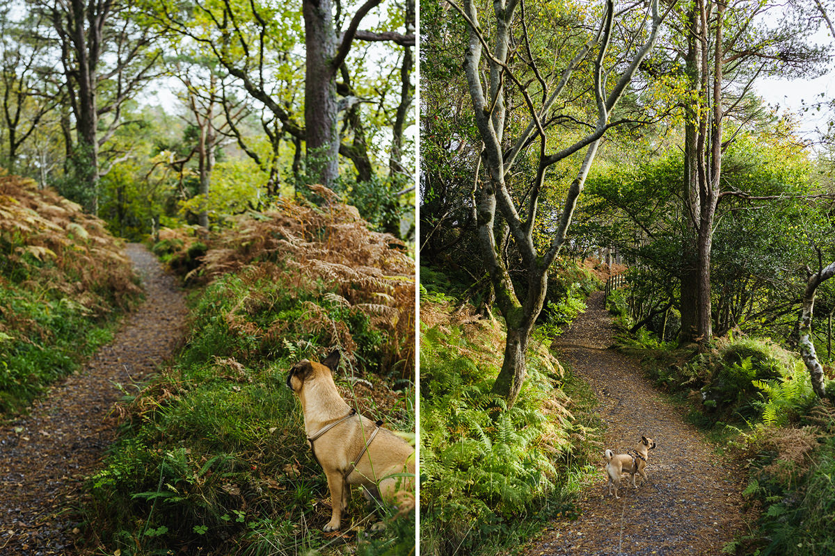 Irland Hund Gleniff Horseshoe 002