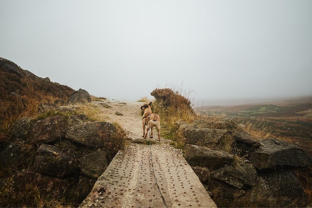 Glendasan Valley Hund Wicklow 005