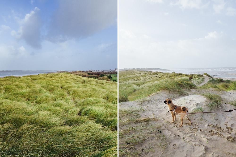 Frankreich Normandie mit Hund Winter 008