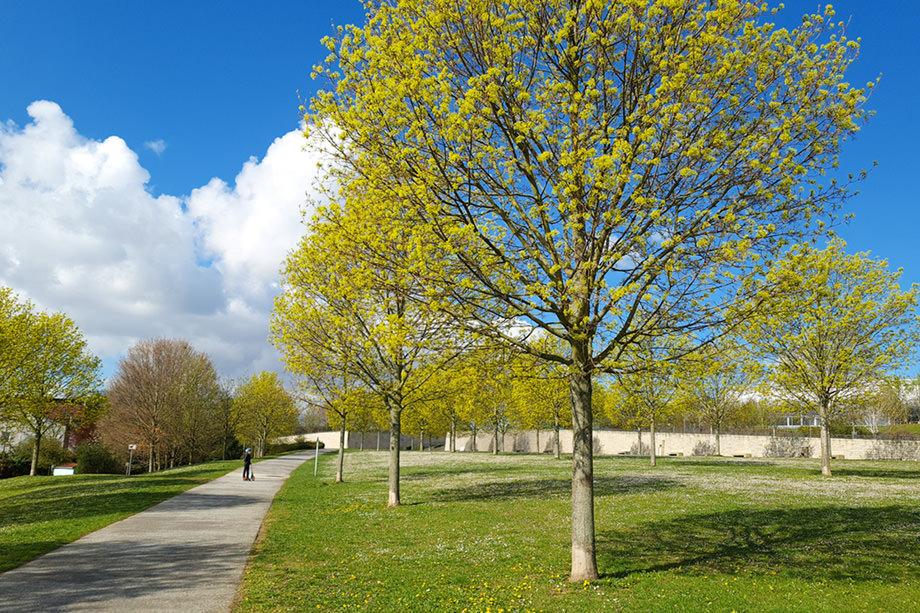 Gassi gehen Frankfurt Frühling