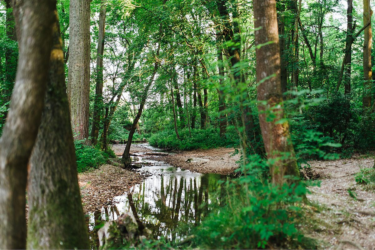 Wasserstrecke in Ober-Erlenbach, Hunderunde in Bad Homburg