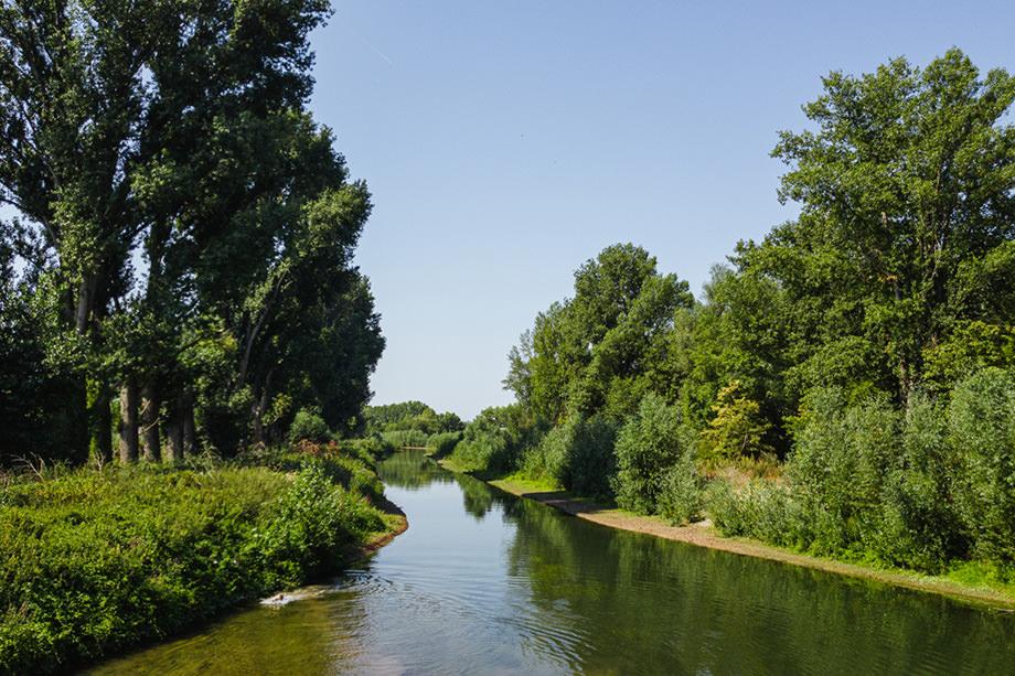 Gassi gehen Rheingau Sommer