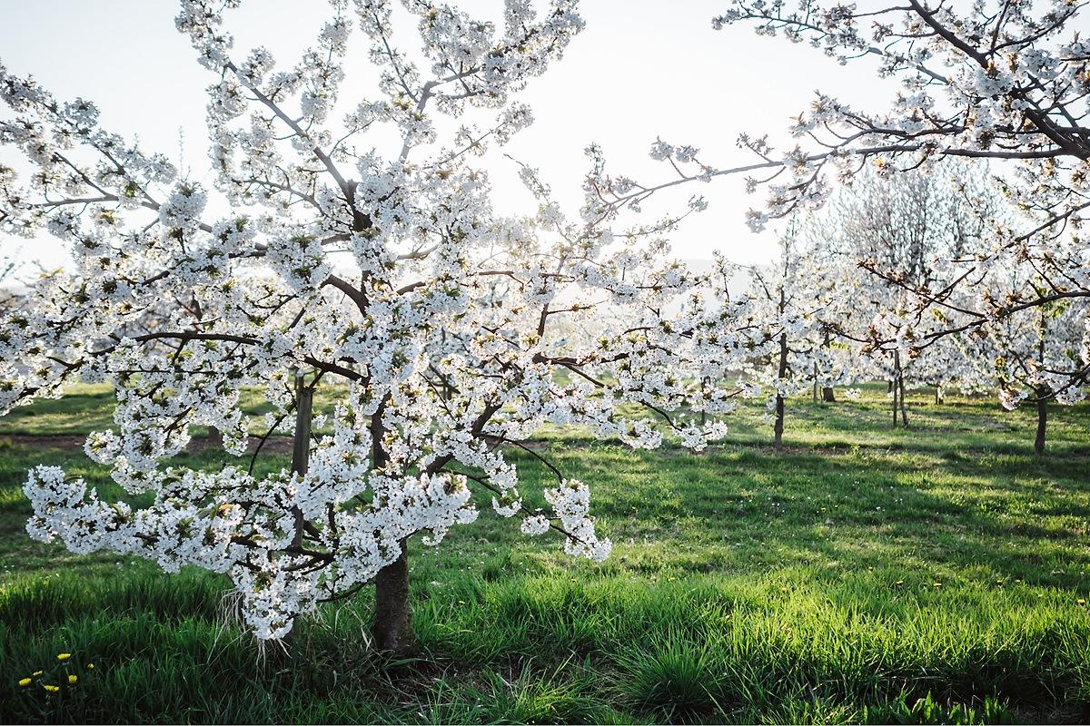 Gassi gehen Taunus Frühling